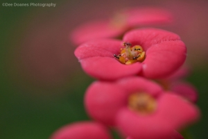Pink-flowers-with-insects-Copyright